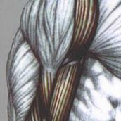 手臂肌肉训练pdf电子版高清扫描版