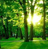 绿色森林生态环境保护ppt模板