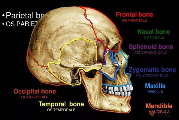 种植牙的流程和注意事项PPT学习课件免费版