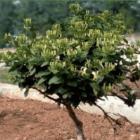 果树盆栽养护手册通俗版pdf免费版
