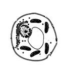 2021新版高考生物一轮复习课件合集免费版ppt完整版【分单元讲解】
