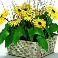 向日葵3D植物模型设计