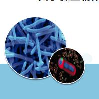 浅蓝微生物学开题报告PPT模板