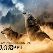 狼群背景的狼性团队文化PPT模板