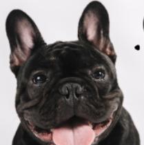狗粮宣传模板PSD素材