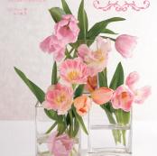 花语词典:赏花,插花,花礼pdf