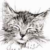 关爱动物公益海报PSD