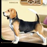 养狗驯狗一本通pdf