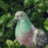 鸽子爱情故事手游免付费版0.5 解锁版